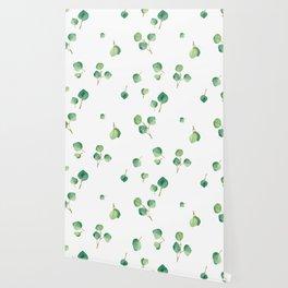 Eucalyptus 1 Wallpaper