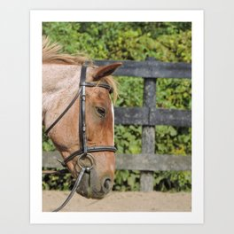 Spotted by a strawberry roan Art Print