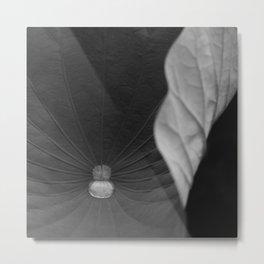 Curled leaf Metal Print