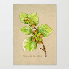 Corylus Avellana Canvas Print