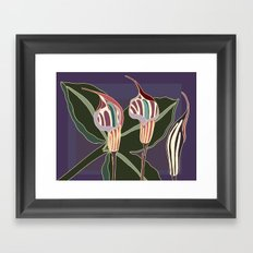 Arum Lilies I. Framed Art Print