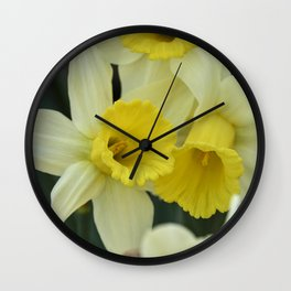 daffodils bloom in spring in the garden Wall Clock