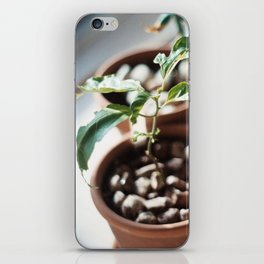 planter iPhone Skin