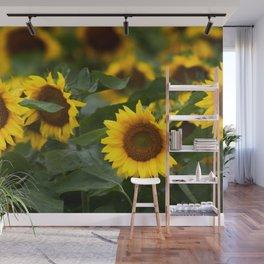 Sunflower Fields Wall Mural