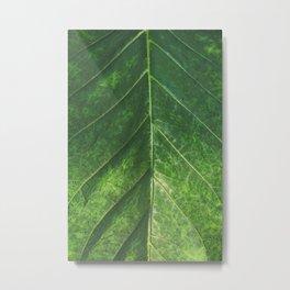 Botanical Gardens Leaf #101 Metal Print