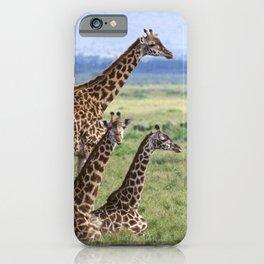 Majestic Giraffe Family Relaxing in Kenya, Africa iPhone Case
