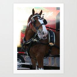 BUDWEISER Clydesdale Art Print