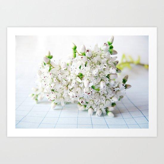 White Sedum Flowers Art Print