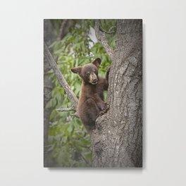 Black Bear Cub Hanging On Metal Print