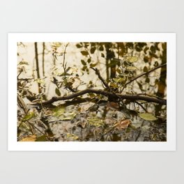 swamp I Art Print