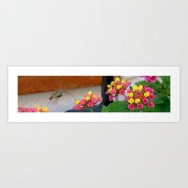 Flowers in Croatia Art Print