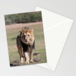 Kalahari Lion King Stationery Cards