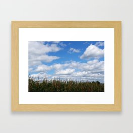 "Corn field in autumn with ""popcorn"" clouds Framed Art Print"
