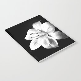 White Lily Black Background Notebook