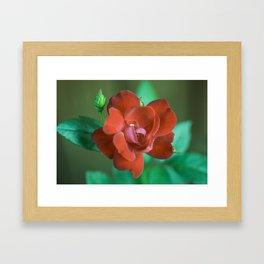Sweet Red Flower Framed Art Print