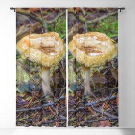 Small Fungi Blackout Curtain