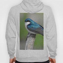 Male Tree Swallow II Hoody