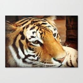 Amur Tiger II Canvas Print
