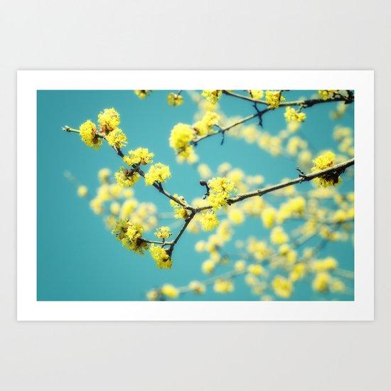 Yellow Spring blossoms Art Print