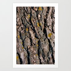 Tree Bark 1 Art Print