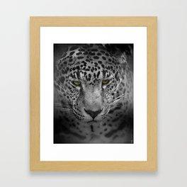 An Intense Stare - Wildlife - Leopard Framed Art Print
