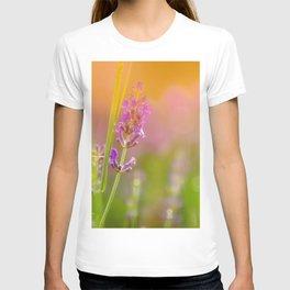 Towards the summer T-shirt