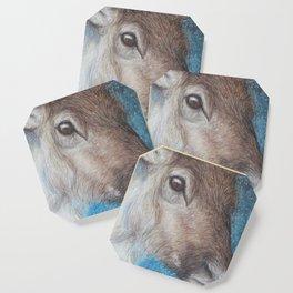 Reindeer (Rangifer tarandus) Coaster