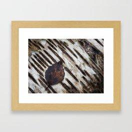Detail of tree bark and leaves. Silver Birch (Betula pendula). Framed Art Print