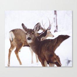 Dear Deer Series 1 Canvas Print