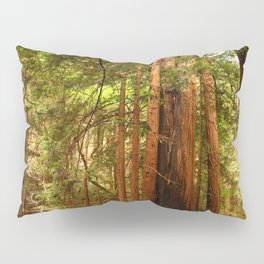 Muir Woods Walkway Pillow Sham