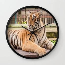 Post Playtime Rest, Indo-china Tiger Wall Clock