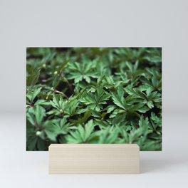 Buttercup Leaves Mini Art Print