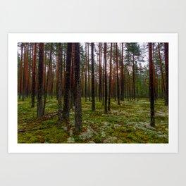 wet pine forest at sunrise Art Print