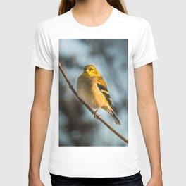 Goldfinch in Winter T-shirt