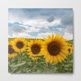 Sunflower Fields Metal Print
