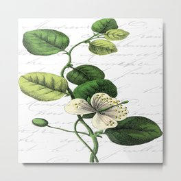 Botanical Flower No2 Metal Print