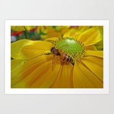 Honey Bee and Dahlia Art Print