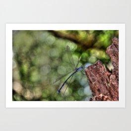 Dragonfly, Port Douglas Art Print
