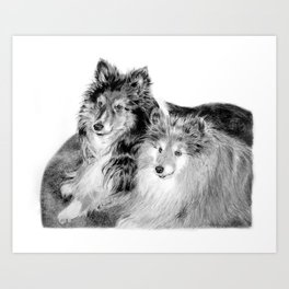 Shelties Art Print