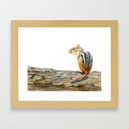 Little Chip - a painting of a Chipmunk by Teresa Thompson Framed Art Print
