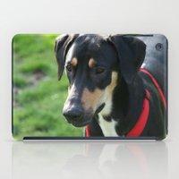 doberman iPad Cases featuring Doberman by Ornithology