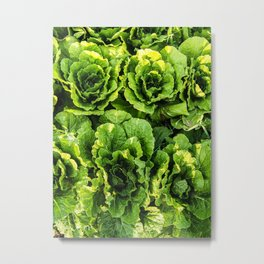 Chinese Cabbage Symmetry Metal Print