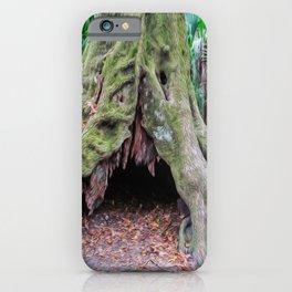 Interesting Tree Trunk iPhone Case