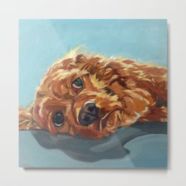 Newton the Lounging Cocker Spaniel Metal Print