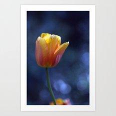 Tulip Solo 1259 Art Print