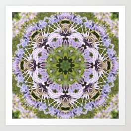 Lacy Lavender Wild Bergamot Kaleidoscope Art Print