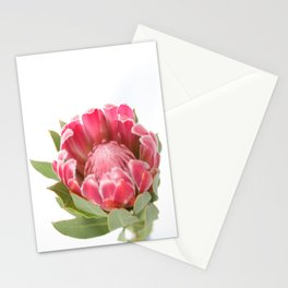 Dark Pink Protea Stationery Cards