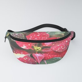 Raindrops on a poinsettia Christmas flower Fanny Pack