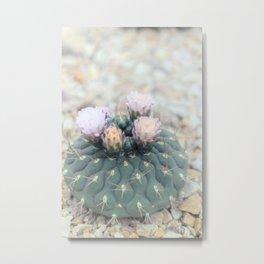 Cactus Plants Metal Print