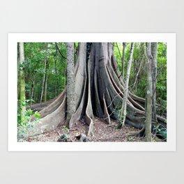 Moreton Bay Fig Tree Art Print
